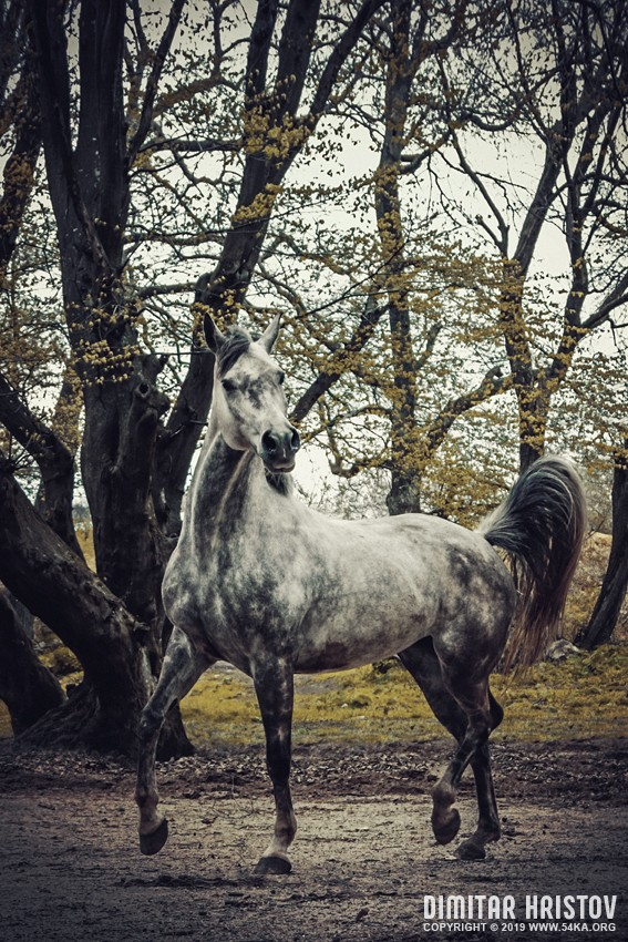 Horse portrait autumn in the forest photography featured equine photography animals  Photo