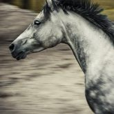 Horse portrait in motion