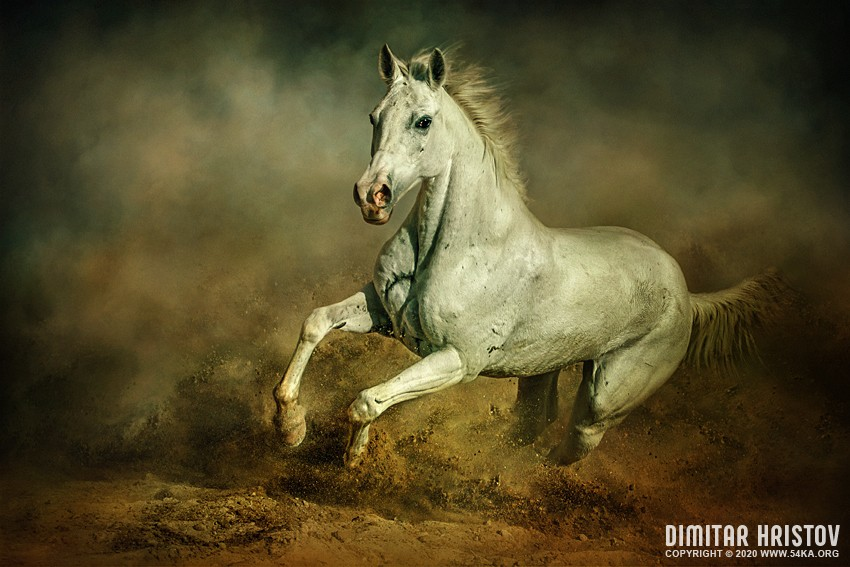 Take Better Horsey Pictures in UAE   Instantly! photography stories equine photography animals  Photo