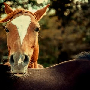 Horse outdoor portrait
