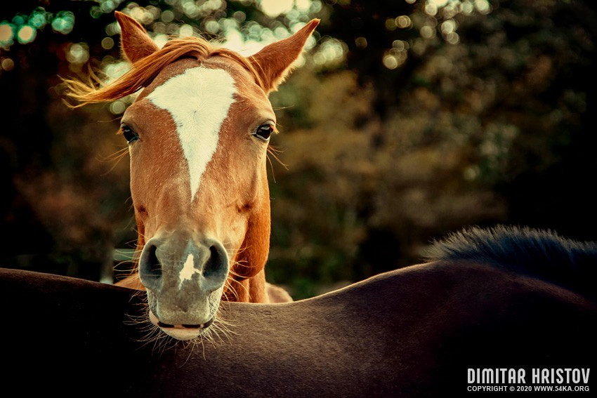 Horse outdoor portrait photography equine photography animals  Photo