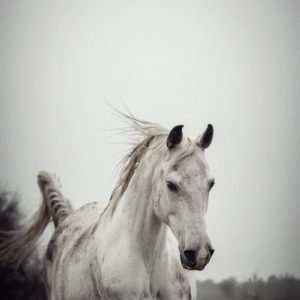 White horse on a muddy day