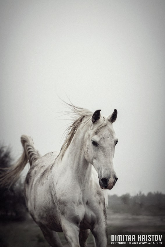 White horse on a muddy day daily dose  Photo