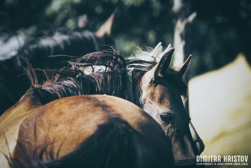 A close up portrait of brown saddled horse profile in nature photography featured equine photography animals  Photo