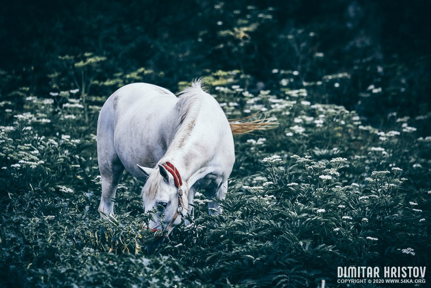 A white horse grazes on a meadow photography equine photography animals  Photo