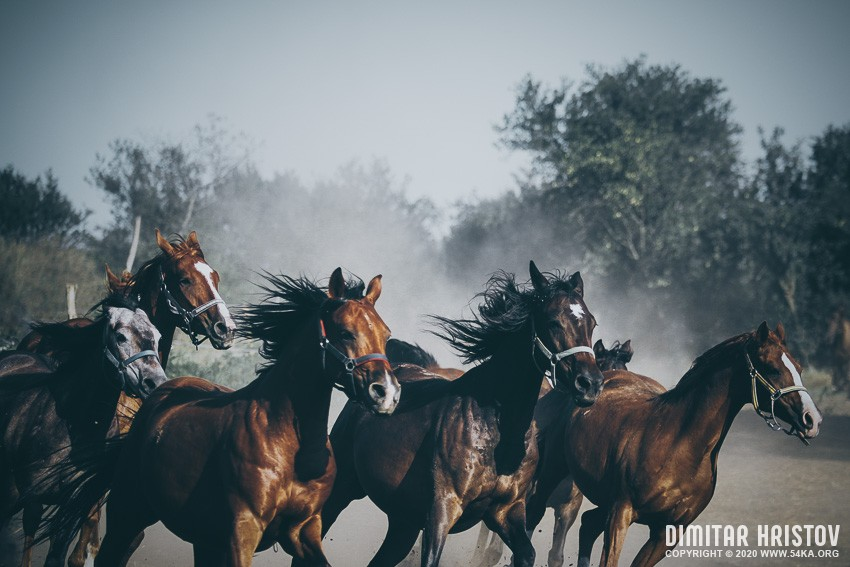 Beautiful horses running photography featured equine photography animals  Photo