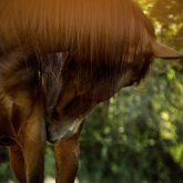 Brown arabian horse close up portrait