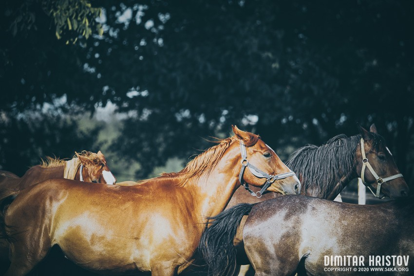 Calm beauty horses photography featured equine photography animals  Photo