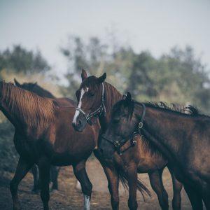 Calm Horses