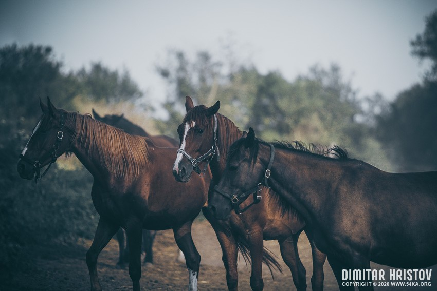 Calm Horses photography top rated featured equine photography animals  Photo