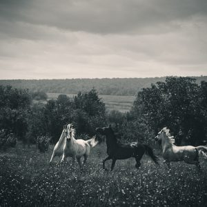 Four horses running in a field