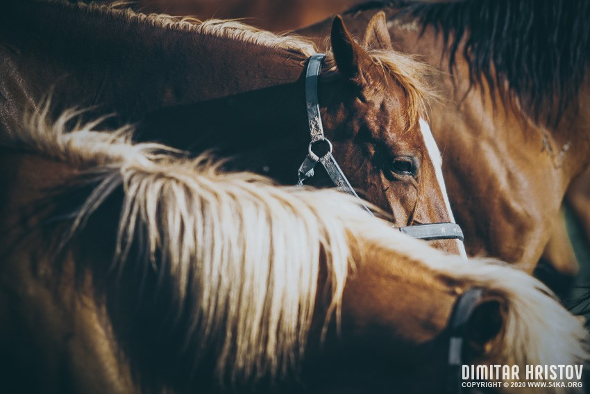 Head shot of a beautiful bay horse photography top rated featured equine photography animals  Photo