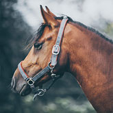 Profile view of a brown horse