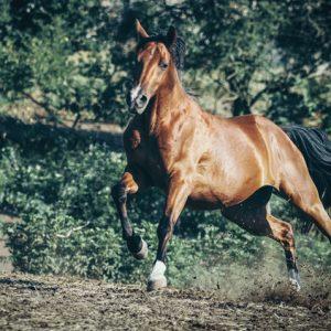 Tabun horses – Equestrian photography by Dimitar Hristov