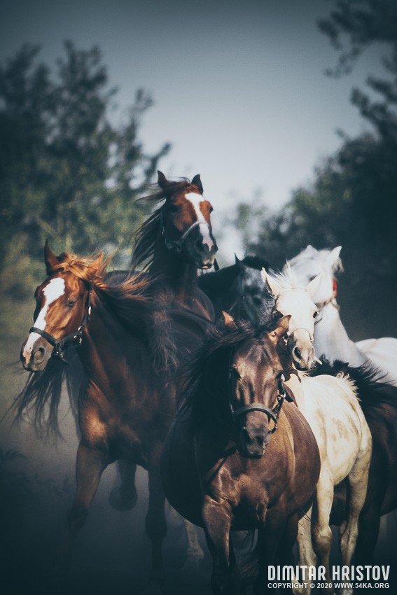 Tabun horses in a gallop photography featured equine photography animals  Photo