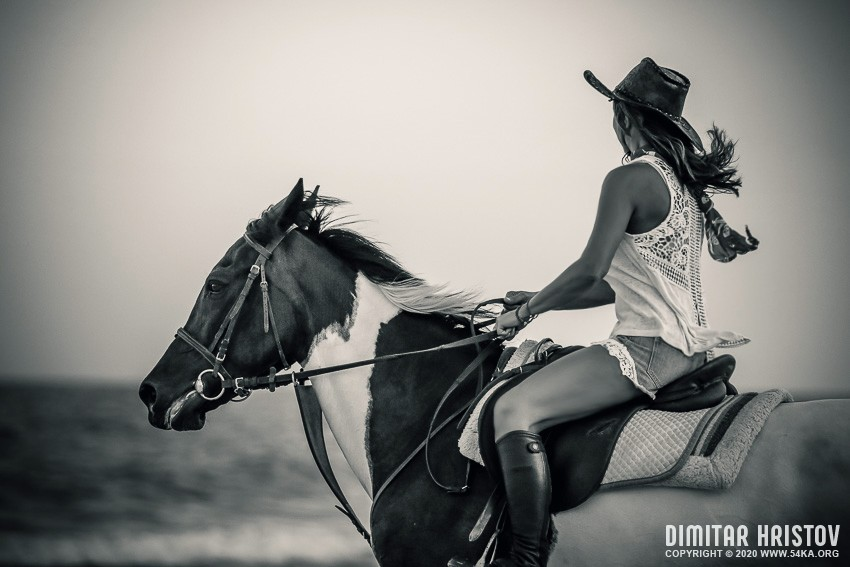 Woman riding horse on the coastline photography top rated featured black and white animals  Photo