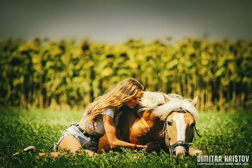 Woman sits at lying horse on the pasture background photography featured equine photography animals  Photo