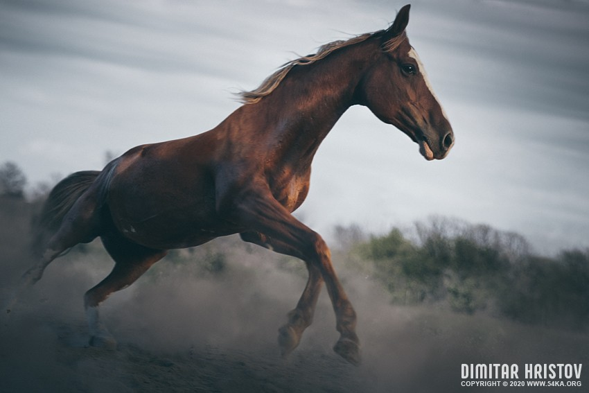 Horse galloping   close up action photography photography featured extreme equine photography animals  Photo