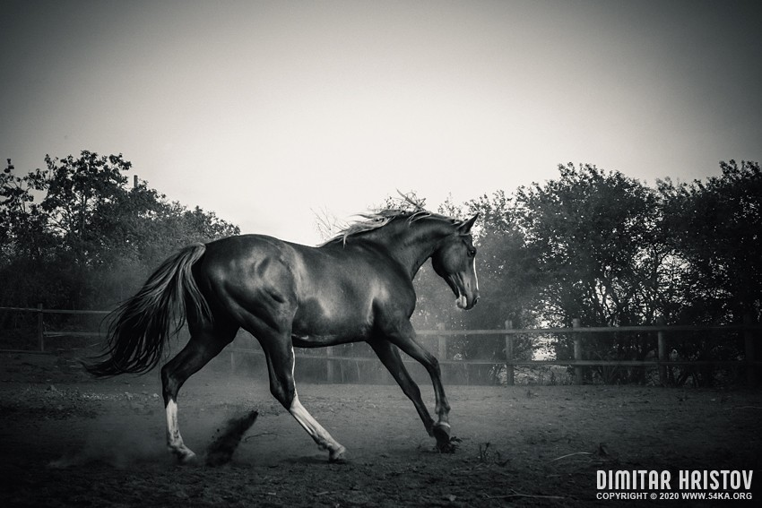 Horse in paddock   Black and White photography equine photography black and white animals  Photo