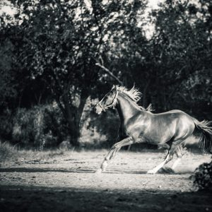 Mare galloping in the forest