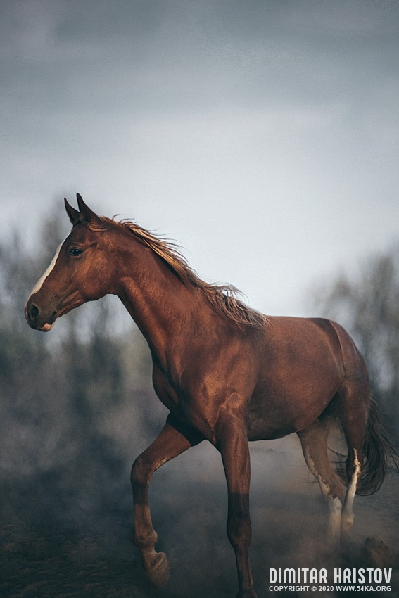 Red horse vintage portrait photography featured equine photography animals  Photo